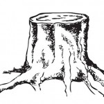tree stump image