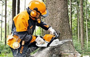 Tree Surgery pic homepage1